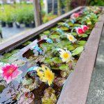 Art Knapp Water Plants 2