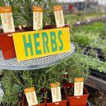 Art Knapp Herbs & Spices 2
