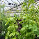 Art Knapp Herbs & Spices 3